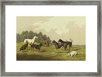 Terriers Framed Print by Henry Thomas Alken
