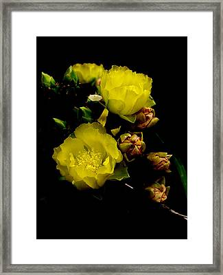 Texas Rose Vii Framed Print by James Granberry