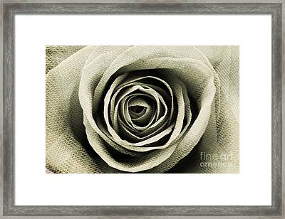 Textured Sepia Rose Framed Print by Clare Bevan