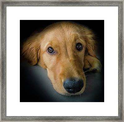 Thanks For Picking Me Framed Print by Karen Wiles