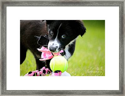 That Gleam Framed Print by Susan Herber