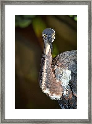 That Look  Framed Print by Saija  Lehtonen