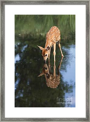 That Must Be Me Framed Print by Sandra Bronstein