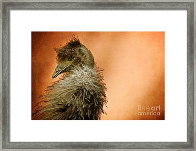 That Shy Come-hither Stare Framed Print by Lois Bryan