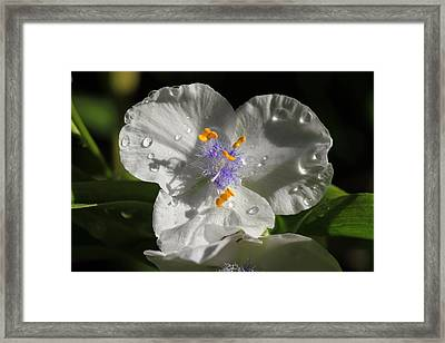 That Touch Of Purple Framed Print by Donna Kennedy