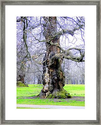 The Ancient Trees Of London Framed Print by Mindy Newman