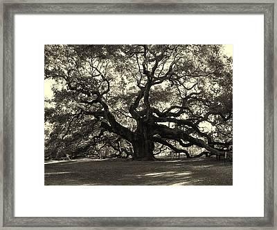 The Angel Oak Framed Print by Susanne Van Hulst