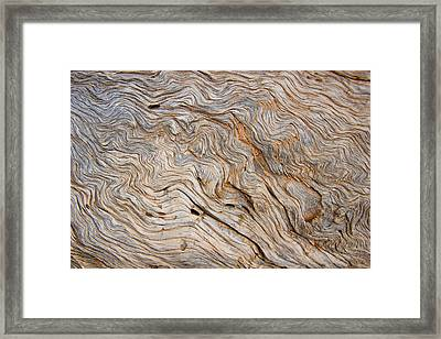 The Bark Of A Pine Is Sandblasted Framed Print by Taylor S. Kennedy