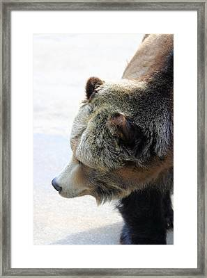 The Bear Framed Print by Karol Livote
