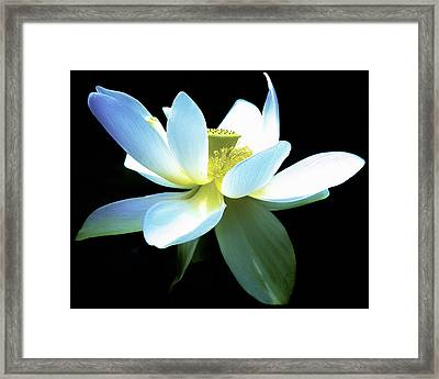 The Beauty Of A Lotus Framed Print by Julie Palencia