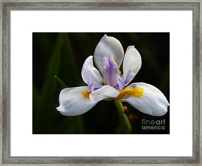 The Beckoning Framed Print by Linda Knorr Shafer