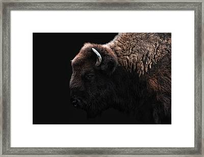 The Bison Framed Print by Joachim G Pinkawa