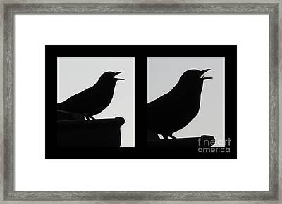 The Black Birds  Songs Framed Print by Joyce Woodhouse