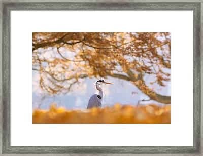 The Blue Heron And The Red Tree Framed Print by Roeselien Raimond