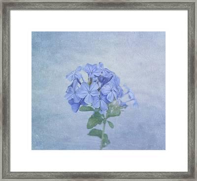 The Blues Framed Print by Kim Hojnacki