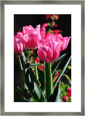 The Bold And The Beautiful Framed Print by Lynn Bauer