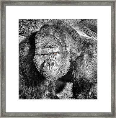 The Bouncer Framed Print by David Millenheft
