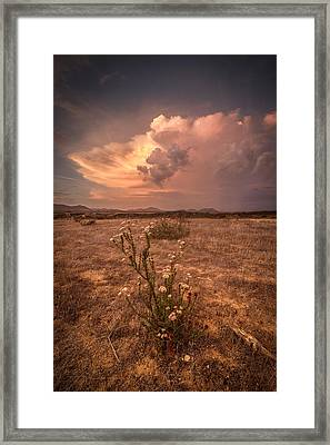 The Bouquet Framed Print by Peter Tellone