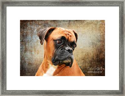 The Boxer Framed Print by Stephen Smith