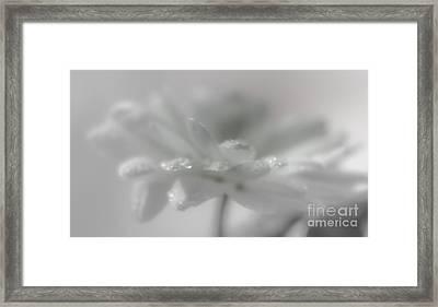 The Breath Of An Angel Framed Print by Lyudmila Prokopenko