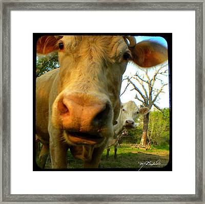 The Breeland Herd Framed Print by Melissa Wyatt