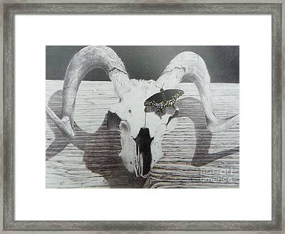 The Butterfly And The Skull Framed Print by David Ackerson