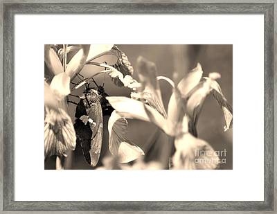 The Butterfly Framed Print by Donna Greene