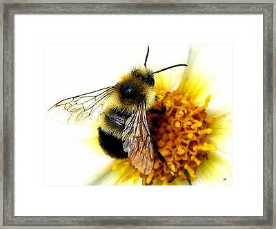The Buzz Framed Print by Will Borden