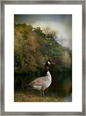 The Canadian Goose Framed Print by Jai Johnson