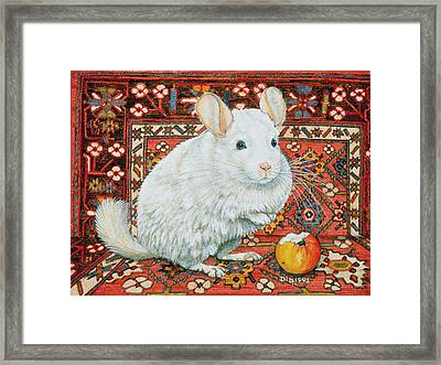 The Carpet Chinchilla Framed Print by Ditz