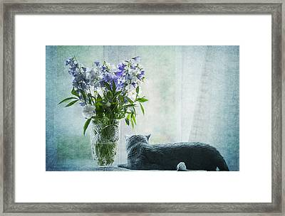 The Cat And The Vase Framed Print by Maggie Terlecki