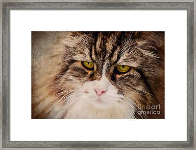 The Cat Framed Print by Angela Doelling AD DESIGN Photo and PhotoArt