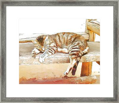 The Cat Is Back Framed Print by Jan Hattingh
