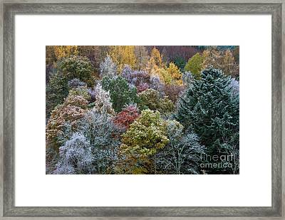 The Changing Season Framed Print by Tim Gainey