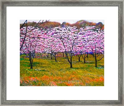 The Cherry Orchard Framed Print by Michael Durst