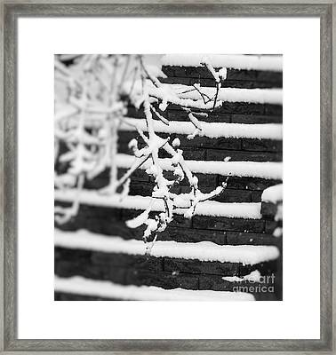 The Clear Path Framed Print by Candice Milnikel-Stude