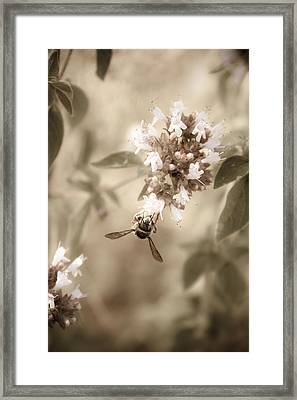 The Collector Framed Print by Danielle Silveira