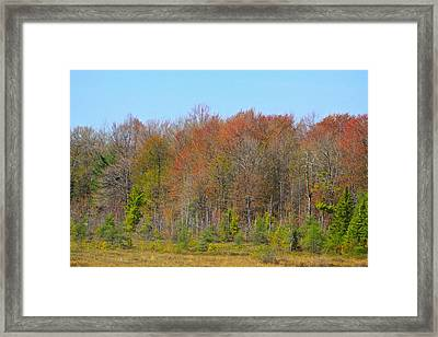 The Color Of Spring-5 Framed Print by Robert Pearson
