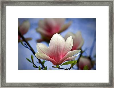 The Color Of Spring Framed Print by Evelina Kremsdorf