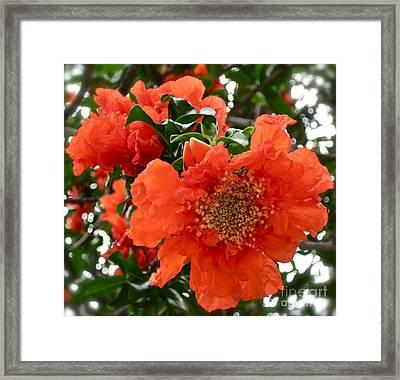 The Colour Orange Framed Print by Gwyn Newcombe