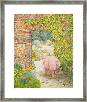 The Convent Garden Pig Framed Print by Ditz