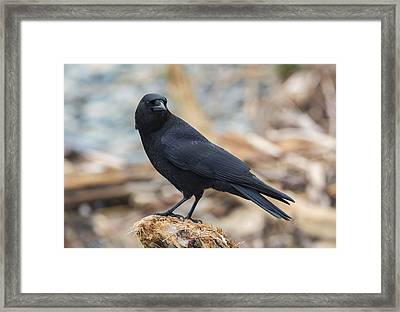 The Crow Framed Print by Loree Johnson