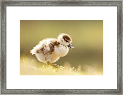 The Cute Factor - Egyptean Gosling Framed Print by Roeselien Raimond