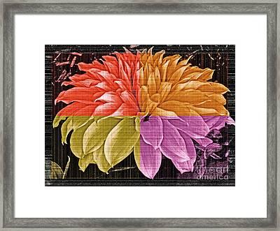 The Dahlia Framed Print by Gwyn Newcombe