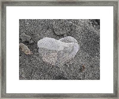 The Delicate Heart Framed Print by Patricia Lyons