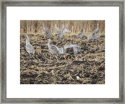 The Dispute 2015-1 Framed Print by Thomas Young
