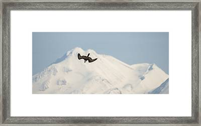 The Dive Framed Print by Loree Johnson