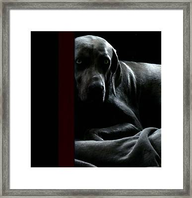 The Dog In The Mirror Photograph Framed Print by Miss Pet Sitter