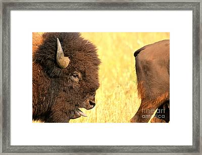 The Donald Framed Print by Adam Jewell