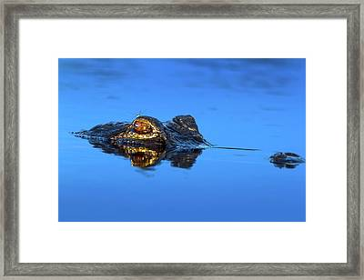 The Dragon And The Dragonfly Framed Print by Mark Andrew Thomas
